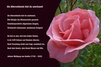 Als Allerschönste bist du anerkannt – Johann Wolfgang von Goethe